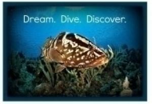 Dream-Dive-Discover